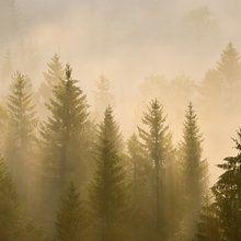 Fototapeta - Morning Mist in Bavaria