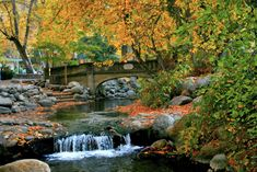 Lithia Park in Ashland OR - had many summer picnics there - we called it YellowJacket Park