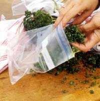 To save herbs at the end of the season make a paste by mixing 1/3 cup of oil with 2 cups of basil, parsley,or  sage in a blender until smooth. Freeze in sealed airtight jars.