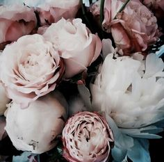 Flowers  shared by ѕαмαηтнα ѕєяєηα ✰ on We Heart It