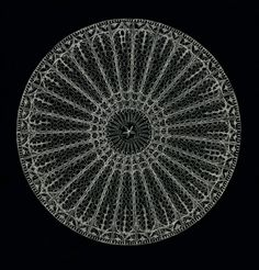 In diatoms, the holes collectively take on the role of a sieve, a two-way filtration mechanism across which water and nutrient molecules permeate the cell. The holes can range from several micrometres down to 100 nanometres in diameter. Arachnoidiscus