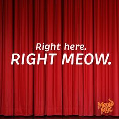 Right here. Right meow.