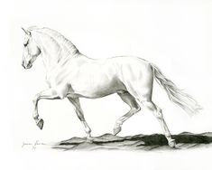 New drawing of Fargo, an Andalusian stallion. Horse Drawings, Art Drawings Sketches, Animal Drawings, Drawing Art, Drawing Techniques Pencil, Horse Sketch, Horse Artwork, Celebrity Drawings, Animal Sketches