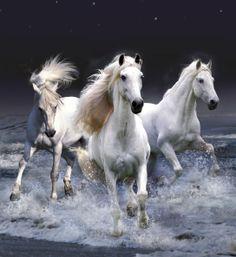 Cavalos Belíssimos