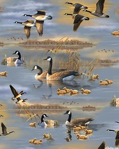 Flying Geese - Canadian Geese Vignettes - Quilt Fabrics from www.eQuilter.com Wildlife Paintings, Wildlife Art, Landscape Paintings, Hunting Art, Landscape Wallpaper, Bird Art, Beautiful Birds, Animal Drawings, Animal Pictures