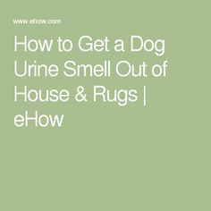 How To Get A Dog Urine Smell Out Of House U0026 Rugs
