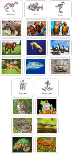 Vertebrate sorting activity cards