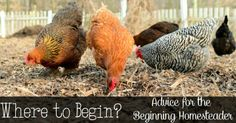 Reformation Acres: ~Your Questions: Where To Start?~