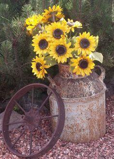 Casa e Fogão: Cultive alegria