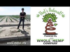 CBD Oil from That's Natural - Pure, Colorado Grown Hemp - YouTube https://www.etsy.com/listing/229945764/250mg-premium-cbd-hemp-oil-colorado?ga_order=most_relevant&ga_search_type=all&ga_view_type=gallery&ga_search_query=cbd%20hemp%20oil&ref=sr_gallery_3