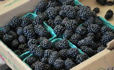 Small-Batch Blackberry Ketchup | All Four Burners