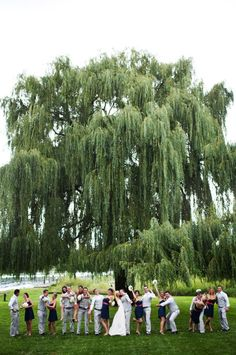love the weeping willow
