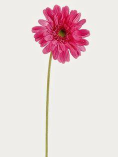 "Pastel Flower Bouquet with Eggs GTD572-PK/HT  21.5"" Medium Gerbera Daisy Spray Hot Pink"