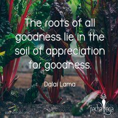 Get grounded on goodness.  . . . . . . #pachavega  #rawwisdom #mantra #positivity #healthylivingtips  #healthylivingjourney #wellness #holistichealth #livelaughlove #rawwholeplantbased #poweredbyplants #wholefoodslife #lifequotes #selflove #awesomewisdom #kindness #goodness #grounded #roots #feelgoodfriday #fridaythoughts #quotes