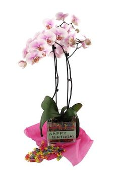 Orchids: The Perfect Gift For Any Occasion