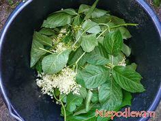 niepodlewam: Dziki bez czarny - gnojówka na krety i nornice 1 kg dzikiego bzu czarnego świeżego albo 20 dag suszonego (liście, młode pędy, kwiaty) 10 l wody