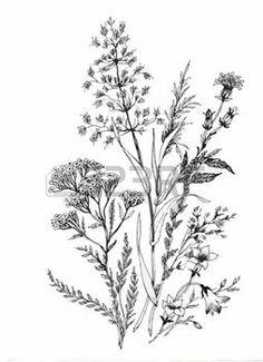 nature vintage: Belle monochrome, noir et fleur blanche isolés. Lignes et traits contour dessinées à la main Illustration