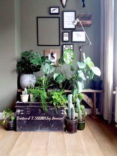 MEVROUW MONSTERA   Stedelijke jungle in huis #planten #planten #kamerplanten #hangplanten #groeninhuis #plantlove #urbanjungle Urban, Display, Plants, Inspiration, Rooms, Tips, Blog, Hush Hush, Floor Space