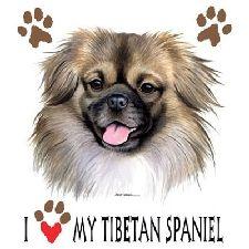 tibetaanse spaniel