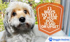Worried about your dog's sudden change in behavior? Here's 11 ways to tell if your dog is sad or upset.