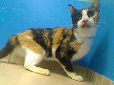Brooklyn NY.  Samoa.  Female.  8 yrs.  Dies in a.m.  See Pets on Death Row- Urgent Death on fb.