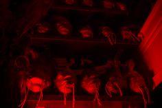 Una visita al consultorio de Satán   Shock.co