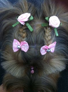 ideas dogs grooming styles for 2019 Dog Grooming Styles, Grooming Shop, Dog Grooming Supplies, Pet Grooming, Corte Shitzu, Yorkie Hairstyles, Creative Grooming, Dog Haircuts, Yorky
