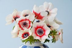 Image result for red + white anemone