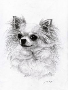 long haired chihuahua drawing - Google Search