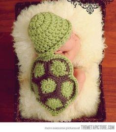 baby turtle.