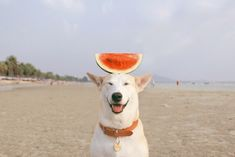 Gluta, The Happiest Dog In The World | iGNANT.de