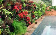 Aproveite a primavera para renovar as plantas no jardim vertical. Foto: Divulgação