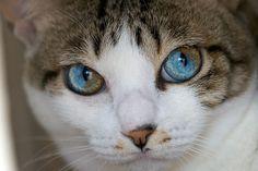 Those eyes, posted via kittykittkittykittykitty.tumblr.com