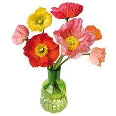 Cadeautip! Met Flat Flowers heb je altijd een vrolijke bos bloemen voor het raam staan. De transparante raamstickers zijn zowel aan de binnenkant als aan de buitenkant van het raam te zien. De raamstickers zijn statisch hechtend (zonder lijm) en hierdoor keer op keer te verplaatsten.