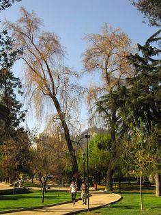 santiago chile casa y jardines picture | Parque Forestal, Santiago, Chile