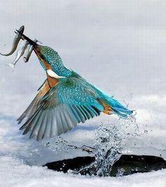 Pour cet oiseau, la pêche a été fructueuse