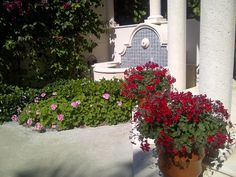 Ivy Geraniums make nice statement at entry and tolerate this sunny location Ivy Geraniums, Sidewalk, Concept, Nice, Garden, Pictures, Photos, Garten, Side Walkway