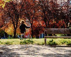 311 under Autumn Sun  #miFamilia366 #autumn #autumngram #pequeMayor #girl #instagood #instakids #kids  #vsco #vscogood #vscogrid #vscohub #vscocam  #photooftheday  #sony #sonyA7 #A7 #sonyCamera #sonyAlpha #Alpha #alphaCamera #camera #mirrorless #humonegrophoto #bicicle #Madrid #love #family #life #photoshoot -------------------------------------------------- Todos los derechos reservados  tropocolo 2016
