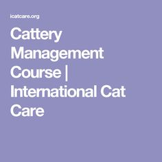 Cattery Management Course | International Cat Care