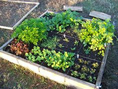 This is what the lower half of my 8' raised beds should be like this year.  Each half is about 4'x4'.