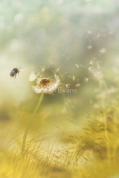 Summer breeze by Lyn Evans