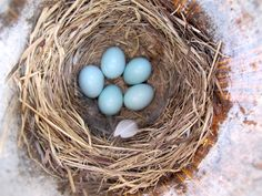 Looking for simple ways to help the birds in your backyard? Check out these ten ideas.