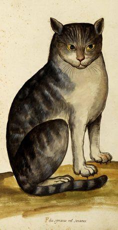 """""""Felis Lybica"""" de Aldrovandi, siglo XVI"""