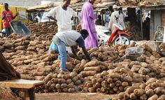 China Demands Dry Yam From Nigeria Yam Exportation Begins July 2017  http://ift.tt/2kTjycw