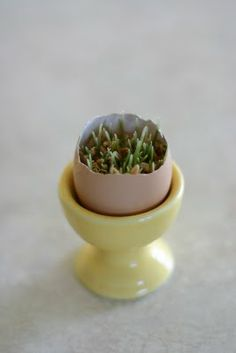 Wheat grass in egg shells! How sweet! Haft Seen, March Equinox, Spring Activities, Teaching Activities, Nature Table, Craft Day, Wheat Grass, Easter Celebration, Easter Holidays