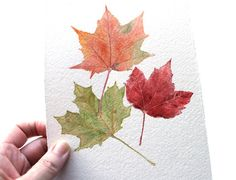 Original Watercolor Painting Maple Leaves - Woodland, Autumn, Fall Foliage, Nature Study, Watercolour, Red, Orange, Green, Yellow. $150.00, via Etsy.