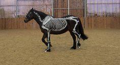 Skeleton horse 2 by Wildflower789 on deviantART