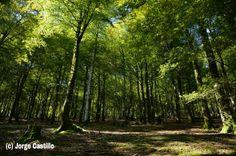 Hayedo del valle de la Ulzama, Navarra