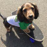 The dashingly handsome mini dachshund!  November 8, 2014 knoxthedox@yahoo.com Bro to @sadietripawd See me in action on Vine! ⤵️