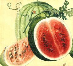 Harvard University Herbaria - Botany Libraries Archives Arnold Arboretum Chines Watercolors China Trade